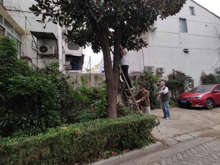小区树木茂盛遮挡采光 社区帮忙修剪